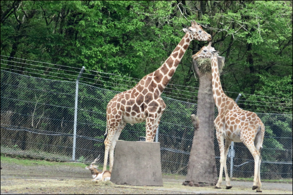 付き合う前デートにおすすめの場所 動物園
